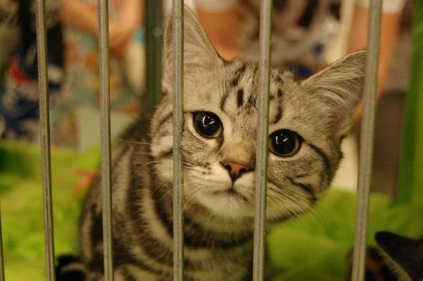 Mezinárodní výstava koček 2018