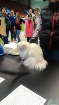 Mezinárodní výstava koček_1