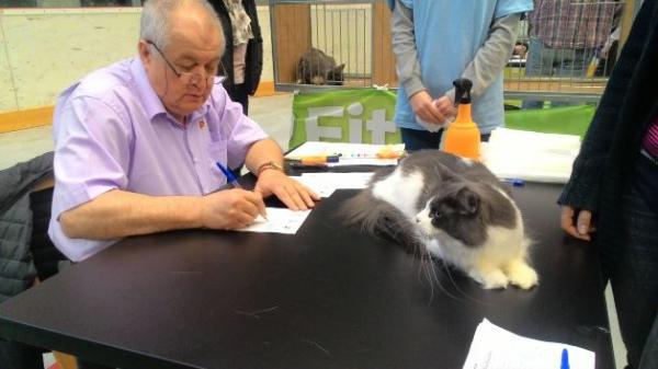 Mezinárodní výstava koček_2