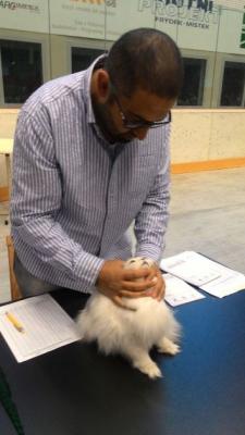 Mezinárodní výstava koček_4