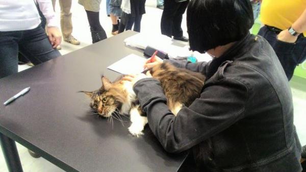 Mezinárodní výstava koček_5