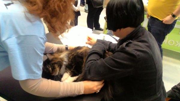 Mezinárodní výstava koček_6